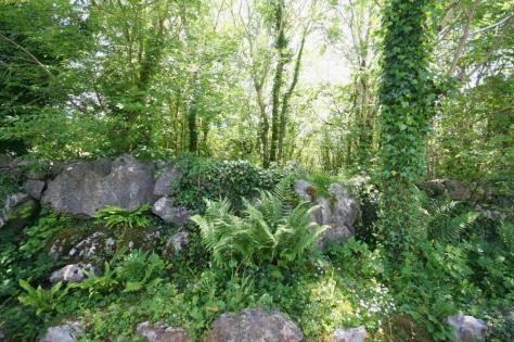 Lush Carran countryside